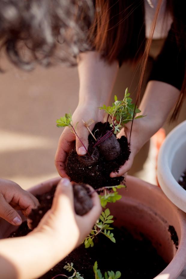 planting-day-6